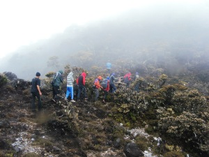 Gunung Latimojong Tomoupa 3478 mdpl